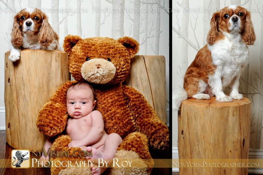 Long Island Newborn Portraits with family dog