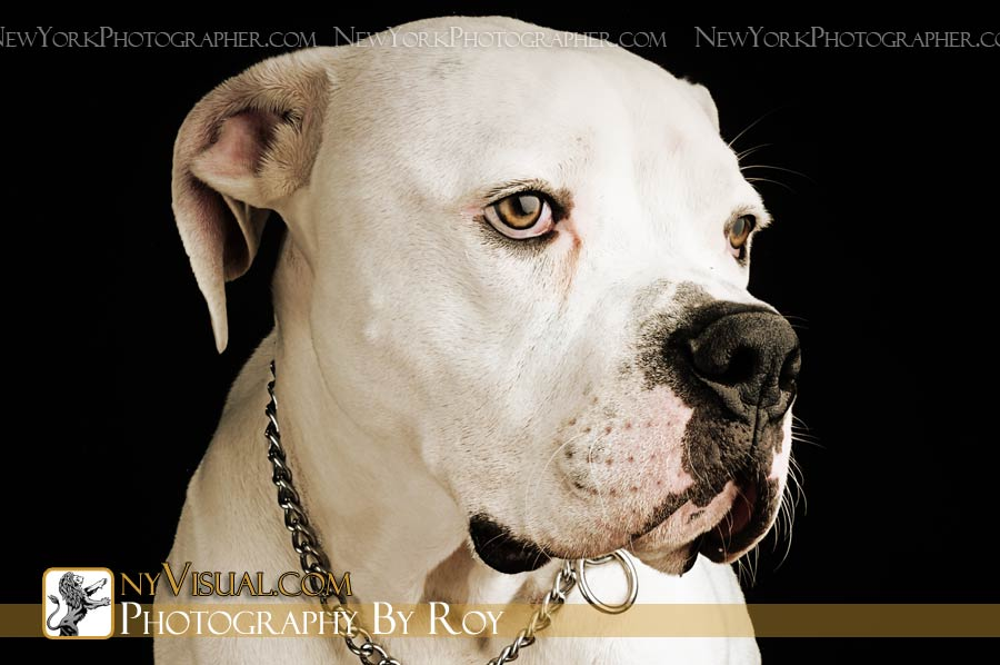 New York Pet Photographer. www.NewYorkPetPhotographer.com