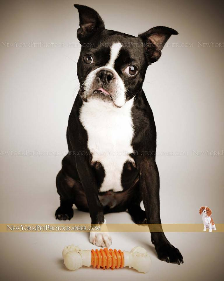 Pet Photography NYC